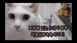 피부병 있는 고양이 약용샴푸로 목욕하기 ! (뿌뿌 냥빨…