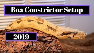 Boa Constrictor Setup   How To Guide