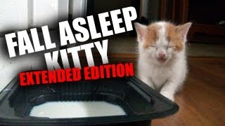 Kitten Falls Asleep Standing Up (Extended Edition) (Original)