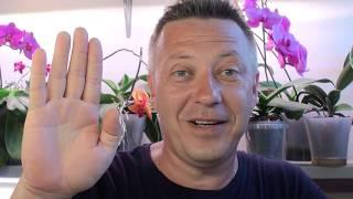 ОРХИДЕИ 5 популярных вопроса по уходу за орхидеями!