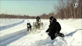 Планета собак. Камчатская ездовая