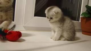 Учимся ухаживать за котятами