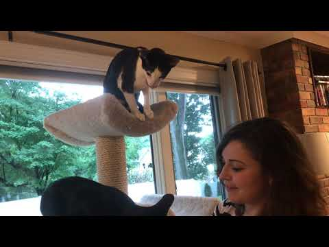 Cats enjoying a group treat!