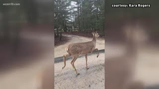CWD found at Montcalm County deer farm