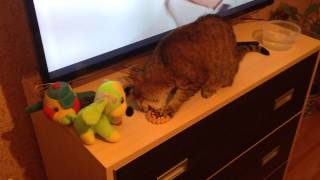 кошка смотреть онлайн бесплатно