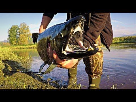 salmon-fishing-vancouver,-bc