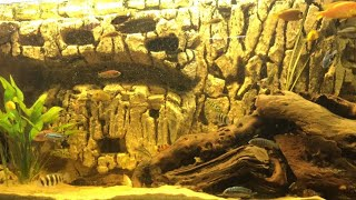Aquarium sandfall how to make your own