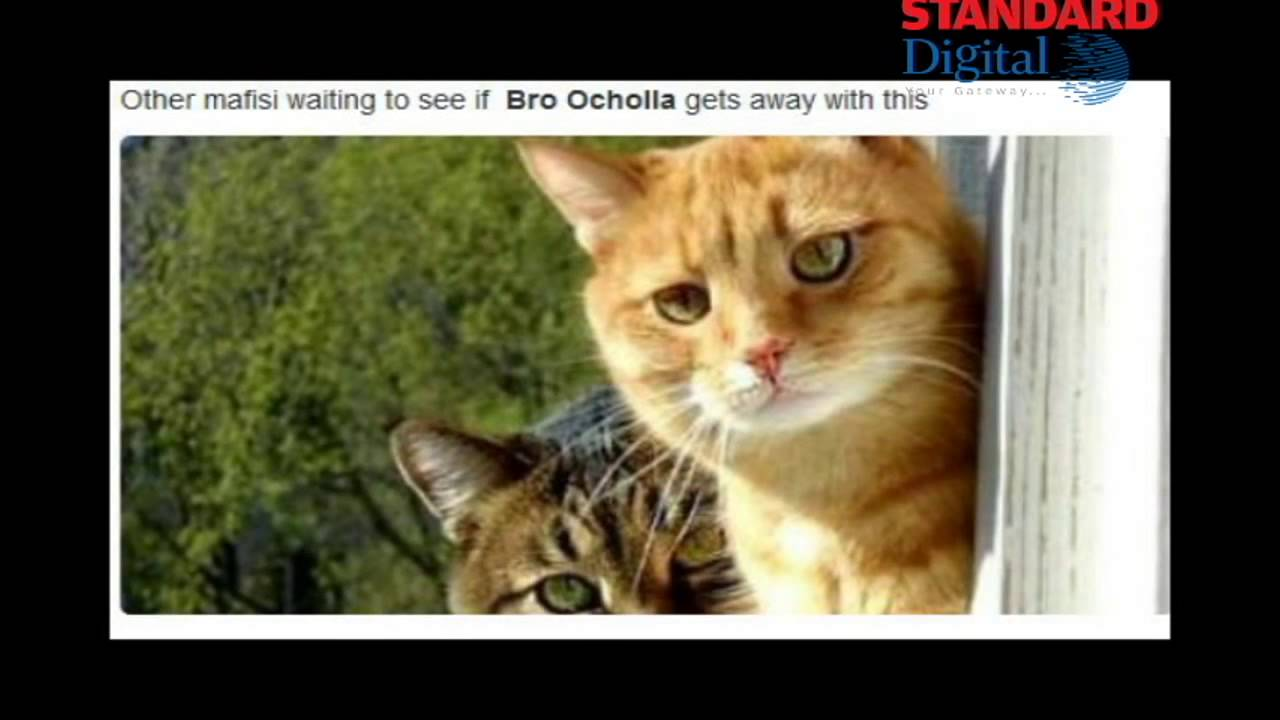 Funny Memes For Brothers : Bro ocholla: funny tweets and memes compilation youtube