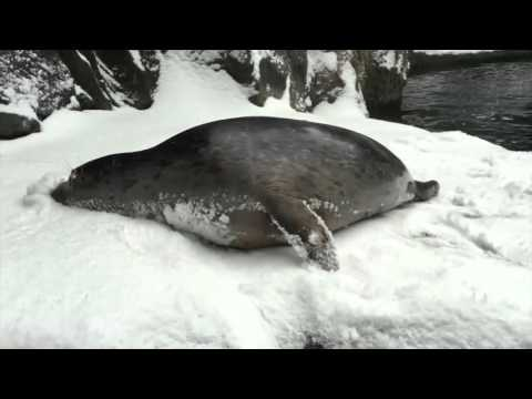 Oregon Zoo animals get a snow day