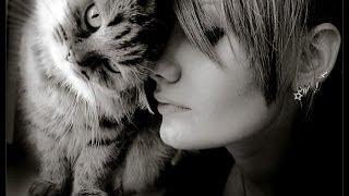Девичья грудь и озабоченный кот-прикол-ржач