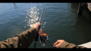Bay Fishing For Bream In Heavy Structure Big Bream
