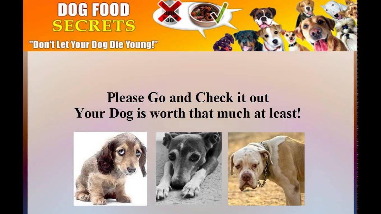how to make homemade dog food recipes