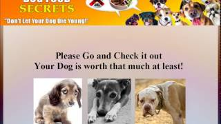 Homemade Dog Food Recipes For German Shepherd | Homemade Dog Food Recipes For German Shepherd