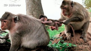 Very Bad Monkey Make Baby Cry Every Days - BBlover 22