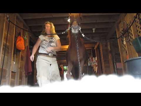 Trimming a rescue Arabian horse