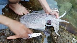 🔥🔥 HIẾU TRẦN | Rất hay: Review câu cá và nướng mực tại đảo