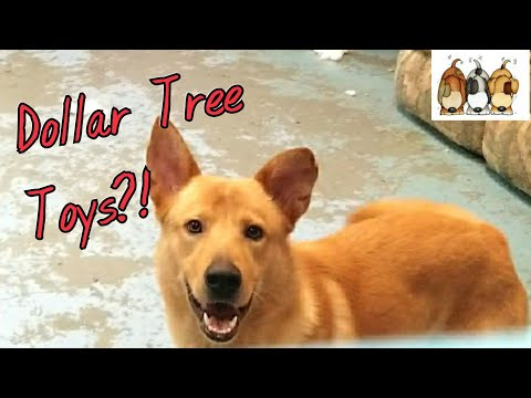 dogs-and-dollar-tree-toys