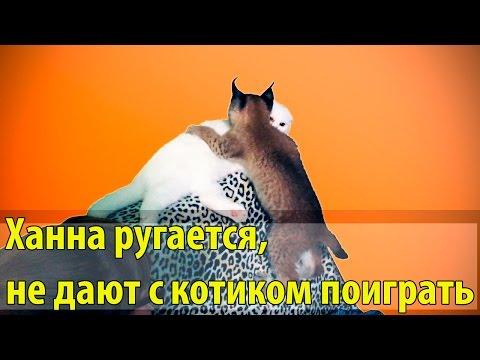 Рысь рычит, ругается, не дают с котом поиграть