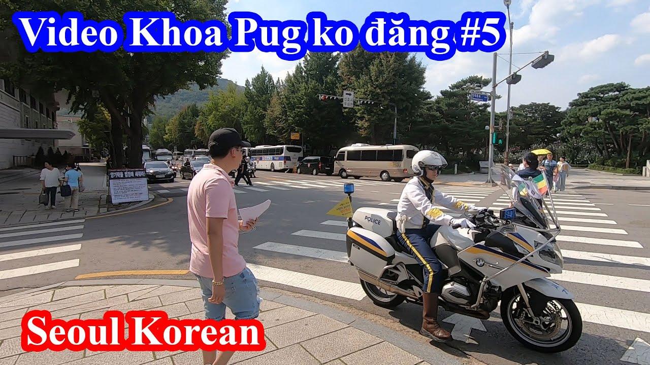 Gà Phô Mai Tokbokki, Gà Rán & Cung Điện Seoul Hàn Quốc - Những Video Khoa Pug Không Đăng #5