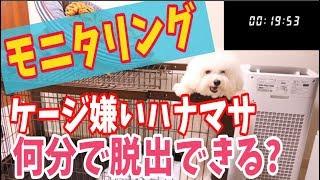 【モニタリング】ケージ嫌いハナマサ何分で脱走するか!!
