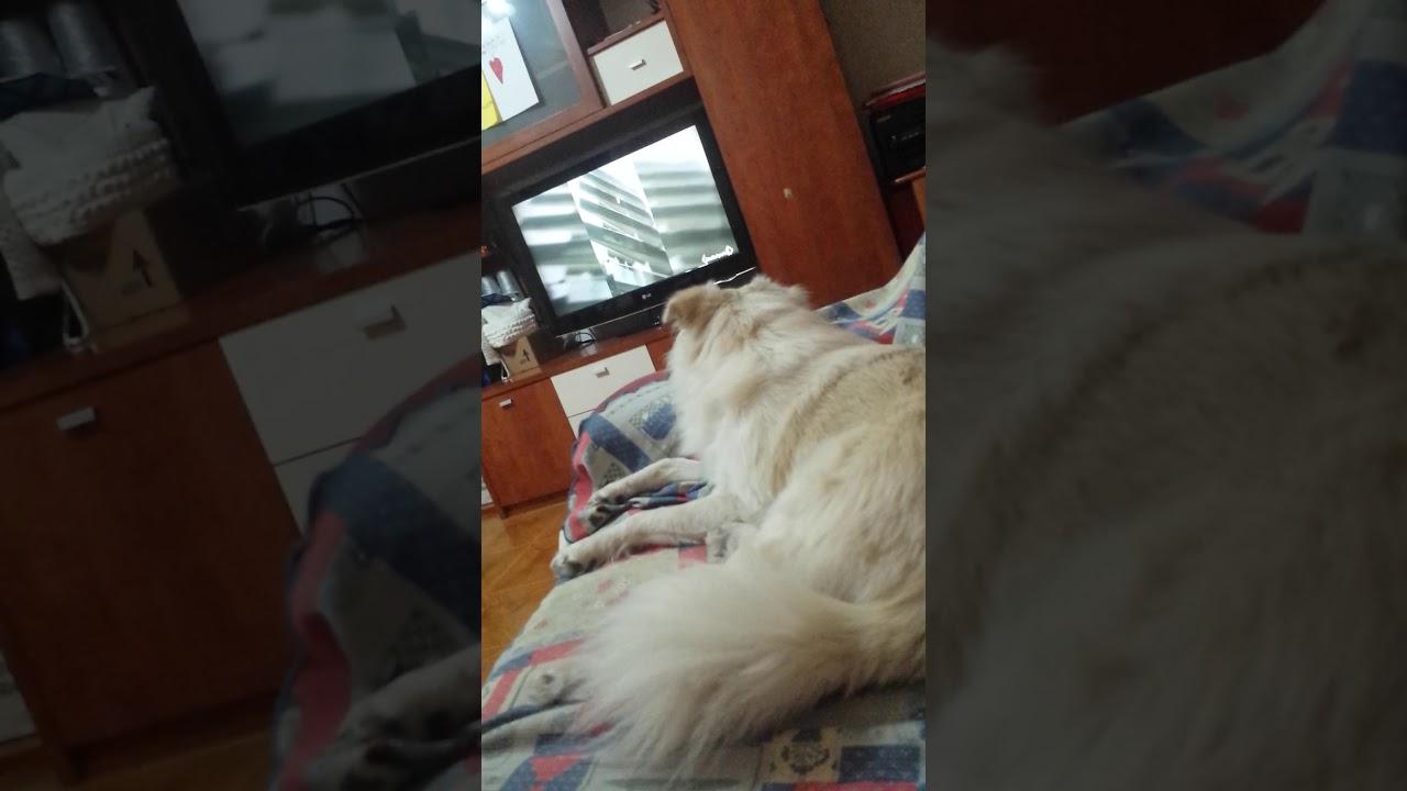 La Mia Casa Group la mia casa è il mio cane nicholas rucco