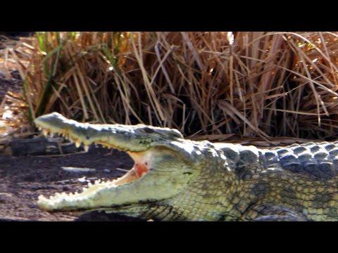 Ethiopia - Lake Chamo - Wildlife