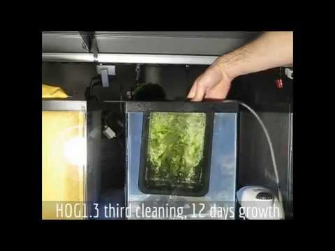 Santa Monica Filtration HOG1.3 Upflow Algae Scrubber - From Box to Green in 3 Cleanings