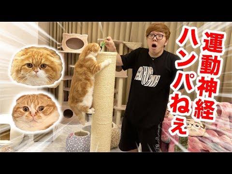 I will show you Maruo & Mofuko's tremendous exercise ability!