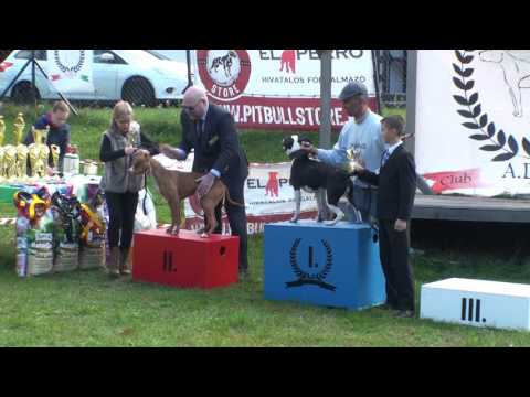 ADBA Club Hungary Sanctioned Show and Top Dog Athletic Event