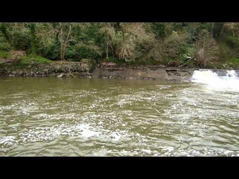 Fishing Beam Weir On The River Torridge!