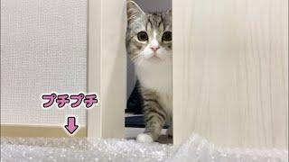 苦手なプチプチを敷かれて部屋に入れなくなっちゃった猫がこちらです…