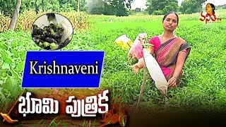 Woman Farmer Earns 4 Lakh A Year From 3 Acres || Krishnaveni || Success Story || Bhoomi Putrika