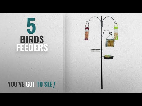 Top 10 Birds Feeders [2018]: Kingfisher Bird Feeding Station