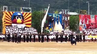 2017 土佐中高等高校 体育祭 黄色組応援団
