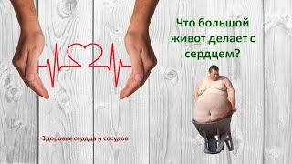 Что большой живот делает с сердцем? Здоровье сердца и сосудов.