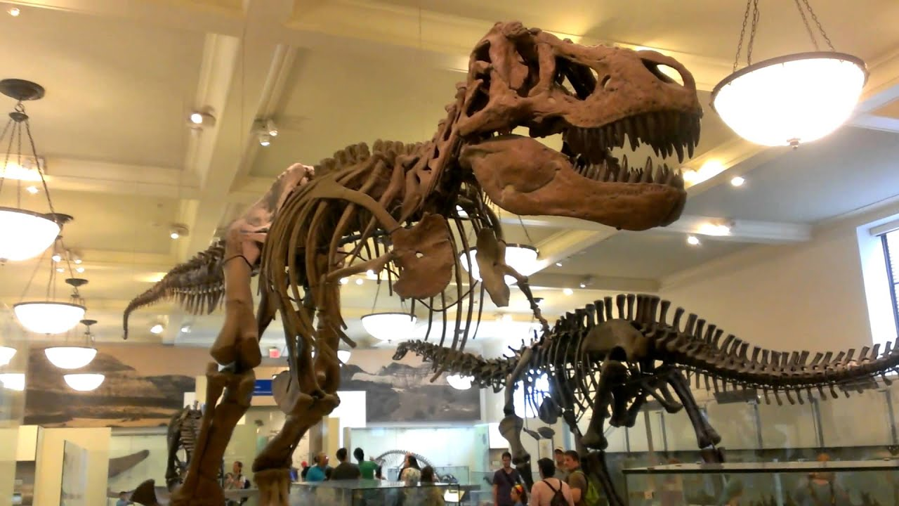 T Rex Museum Of Natural History