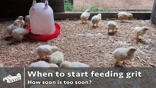 Feeding Chickens Grit Early Enough? - Ama S7:e2