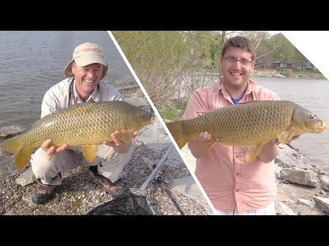 What Catches More Carp, Corn or Boilies? (Shore Fishing for Carp)