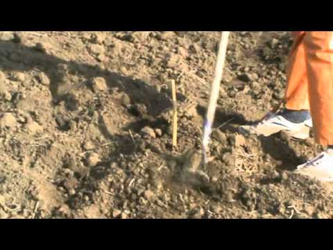 Посадка винограда с использованием гидробура