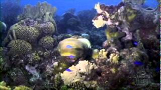 Twilight Reef by HD Underwater Video