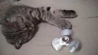 Кошка и спиннер