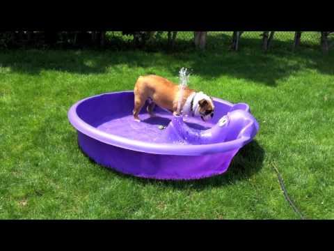 Wilson and his new Kiddie Poolmov  YouTube