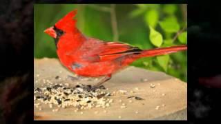 Which Bird Feeder Is Best