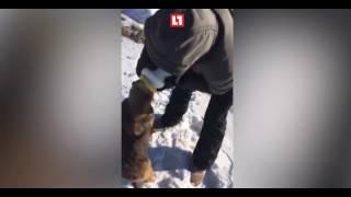В Хабаровске Парень спас собаку которая застряла головой в майонезной банке
