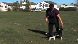Pet Training Red Deer Oh My Dog!