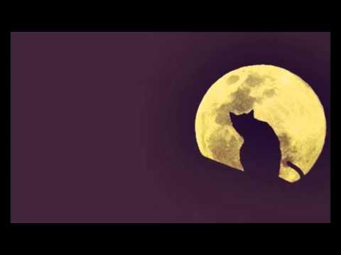 Trailer do filme A Lenda do Gato Preto