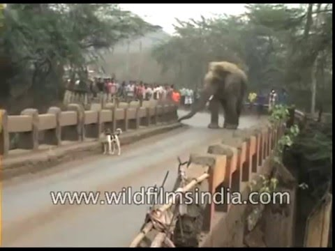 Elephant strays into