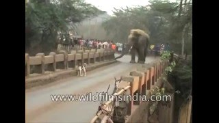 Elephant strays into Indian town, pushes truck off highway!