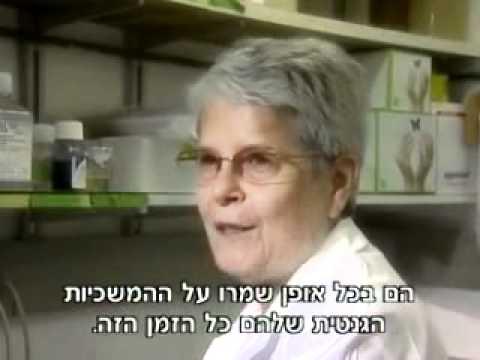 מקורם של הפלשתינאים מעם ישראל