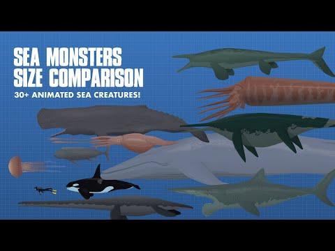 LARGEST SEA CREATURES